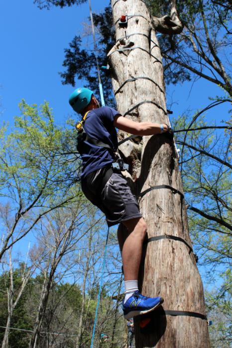 Multiple Tree Climbs